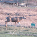 Above picture taken just as construction was beginning on SEC on Rosewood Lakes Golf Course.  Deer most likely to be severely affected by project. Picture taken by Nancy Cummings