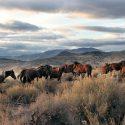 13 Wild Horses