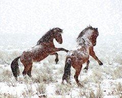 In Snow Flurries