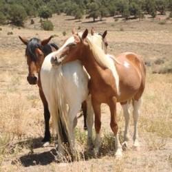Hidden Valley Horses